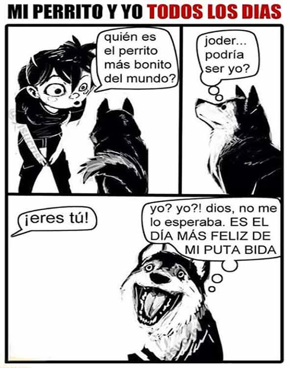 1210-04-02-16-perro-feliz-humor
