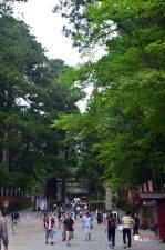 Yendo hacia el Templo Toshogu