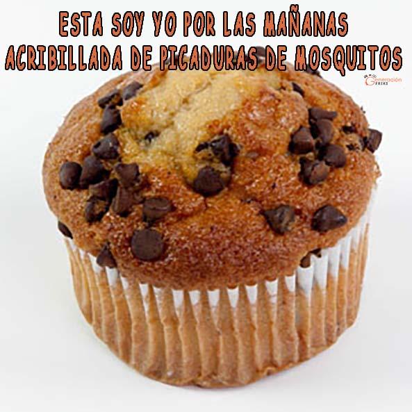 1308-12-06-16-muffin-pepitas-chocolate-picaduras-humor