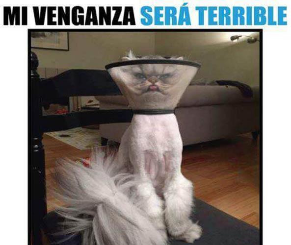 1362) 18-08-16 Venganza-gato-Humor