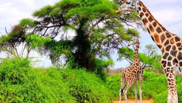 Les plaines d'Afrique du Sud et ses animaux
