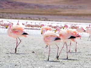 La faune péruvienne