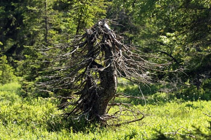 produits l'arbre vert
