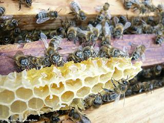 terre de miel