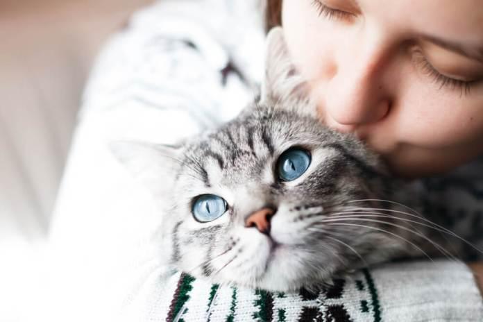 Semplici Consigli Per Aiutarti A Capire I Gatti