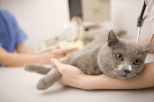 Suggerimenti per curare con successo il tuo animale domestico