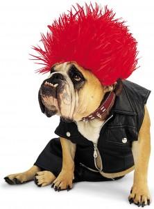 Pericoli spaventosi di Halloween per il tuo animale domestico