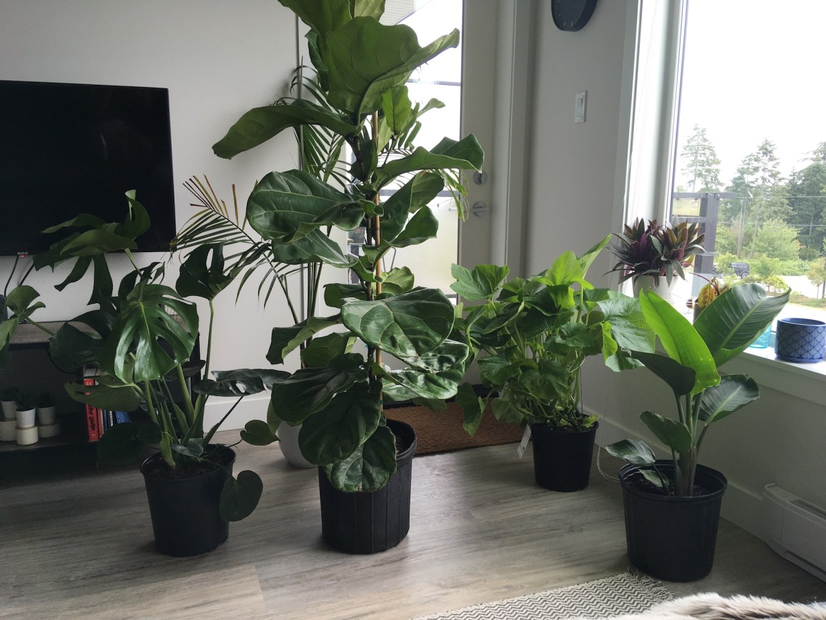 Generic Van Life - End of Van Life - Houseplants