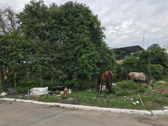 Em Guia de Pacobaíba, falta o simples: coleta de lixo, rede de esgoto e água encanada | Foto: Maria Martha Bruno / Gênero e Número