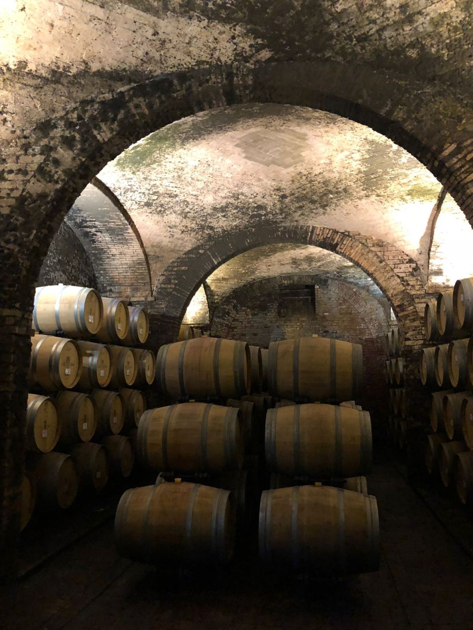 The cellars of Villa Sant' Anna