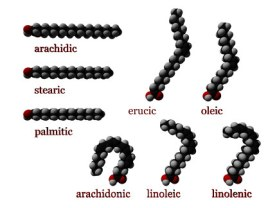 Fatty Acid Molecules (Creative Commons Wikimedia)