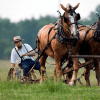 Amish use GMOs, pesticides yet cancer rates remain very low