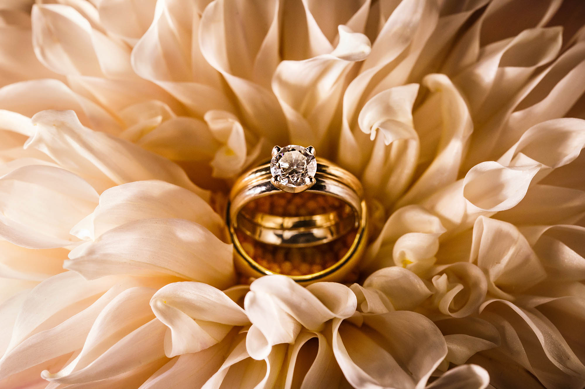 A beautiful close-up image of wedding rings stacked on top of each other inside a cream colored flower on the bride's wedding bouquet taken in Northeast Ohio.