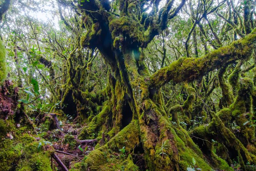 Mossy Forest Antara Penyumbang Pendapatan Terbesar Sektor Pelancongan Pahang 1