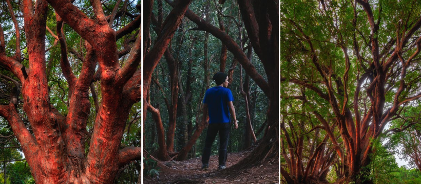 'Hutan Merah' DI Pahang Janjikan Pengalaman Berbeza Seakan Berada Di Alam Fantasi! 4
