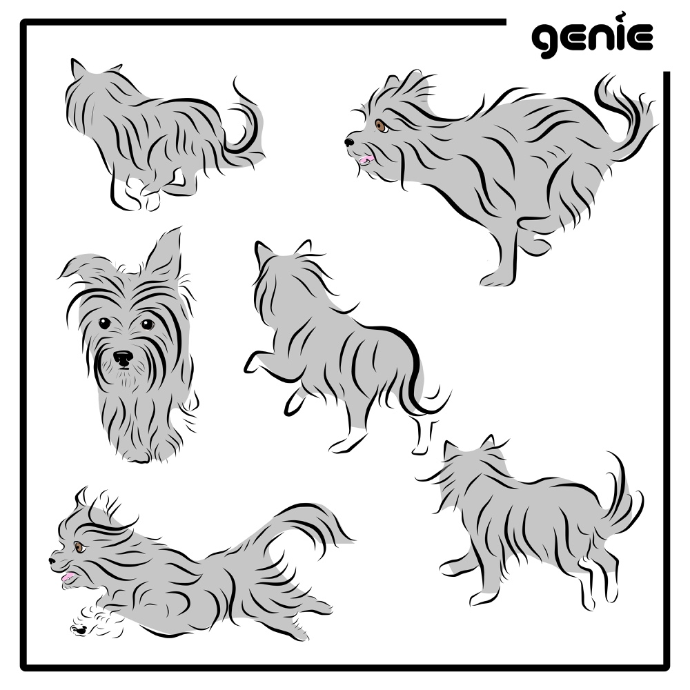 Yorkshire Terrier Yorkie Dog Vector Graphic Illustration Hand Drawn Drawing Sketch - Royalty Free Digital Instant Download PDF SVG PNG