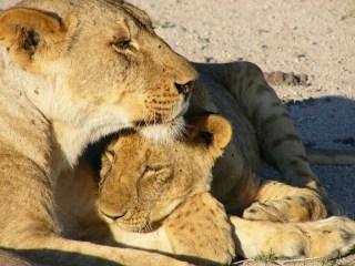 Genitorialmente|Come essere una brava mamma