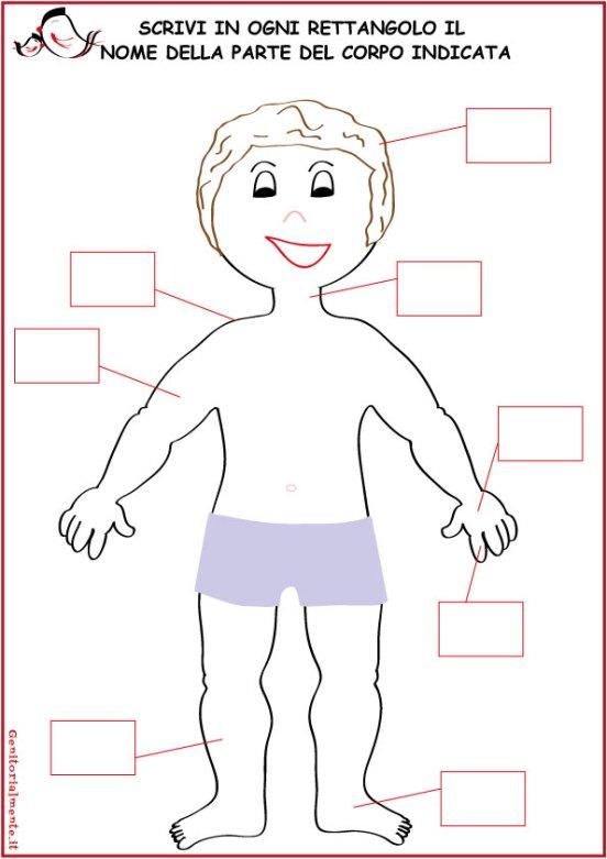 Come insegnare le parti del corpo umano | Genitorialmente