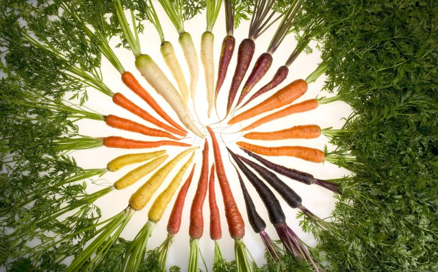 Carrot Genome Sequenced | GenomeWeb