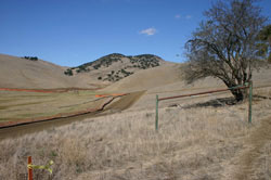 Brushy Peak Regional Preserve a favorite livermore trails hike