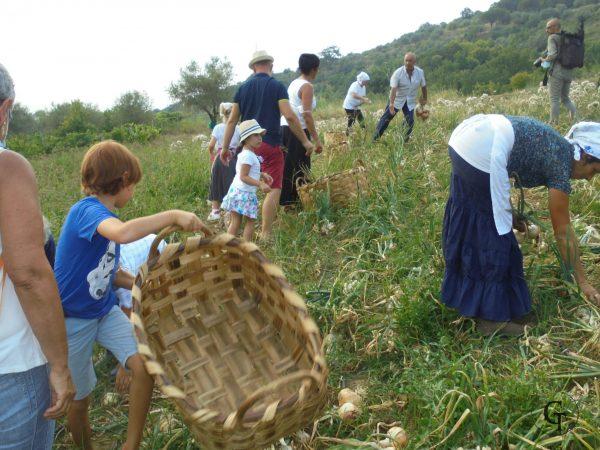 Biodiversità e comunità locale, la Cipolla di Vatolla