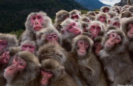 """""""Μαϊμού"""" αποφάσεις…"""