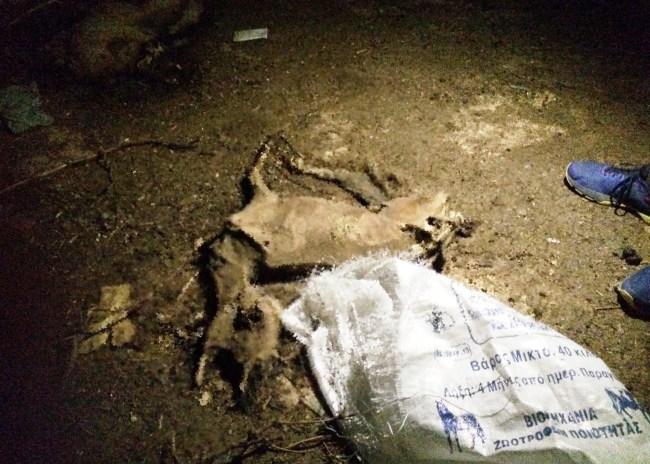 Ηράκλειο: Αποτρόπαιο θέαμα νεκρών προβάτων στον Ανισαρά
