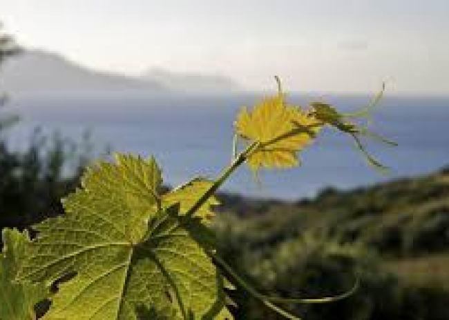 Επιστολή στον πρωθυπουργό της Οργάνωσης Αμπελουργών Κρήτης