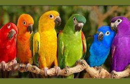 """Οι μόνοι που """"ξεβρακώθηκαν"""" ήταν οι παπαγάλοι"""
