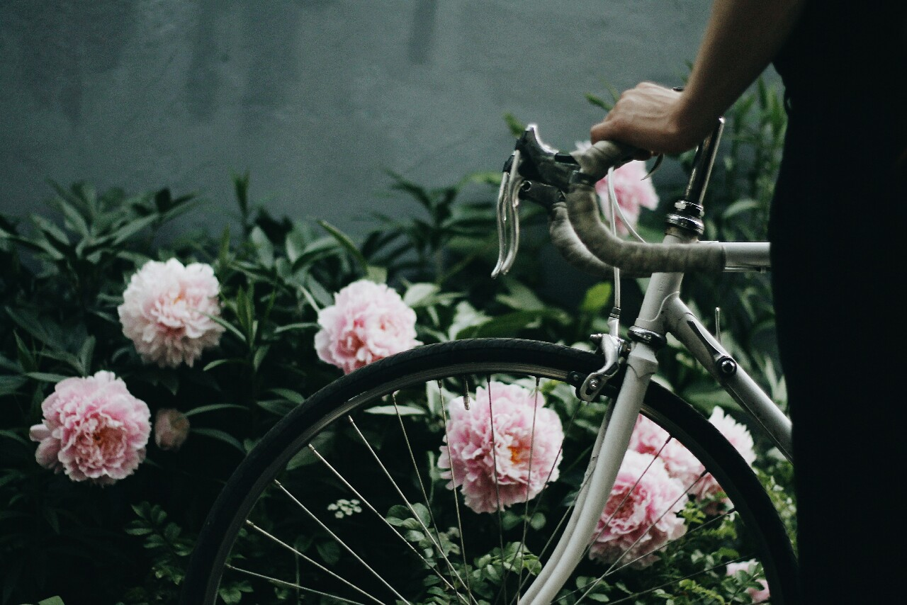 Amir's bike in front of pink peonies