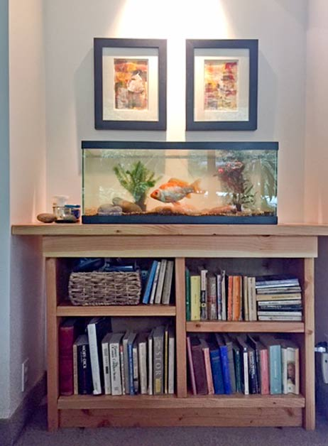 """The new 20 gallon tank on the sturdy fish stand I built out of 2"""" x 6"""" boards."""