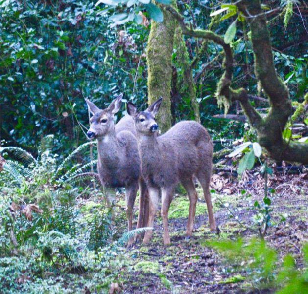 My two deer