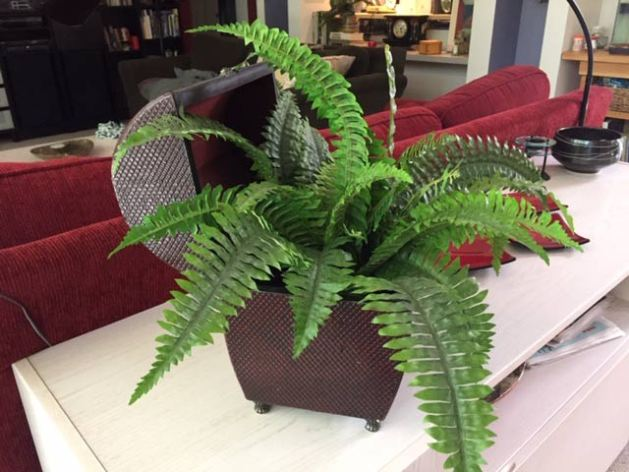 Fake fern in a wicker chest - nothing I would have picked out but looks great!