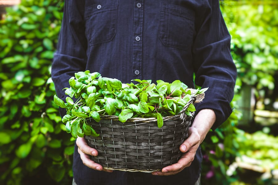 These Are The Best Herbs To Jumpstart Your Spring Garden