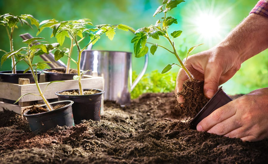Interesting Gardening Products You Want Right Now