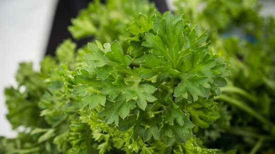 Fresh parsley, a great choice for seasoning steak.
