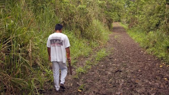 Searching the Ecuadorian jungle for the toquilla palm plant