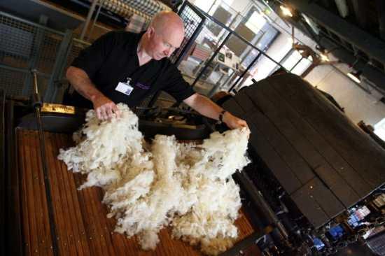 Sorting raw wool