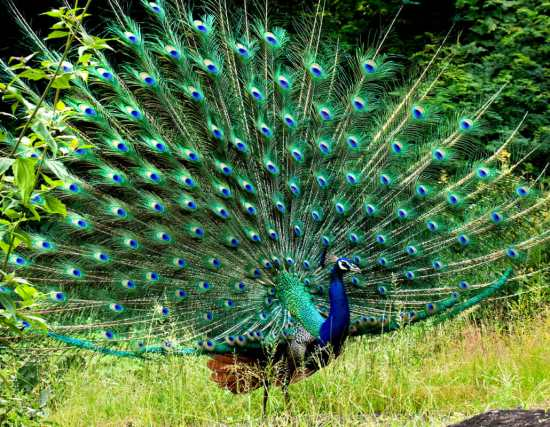 Unlike the extravagant peacock, the natural features of the human male aren't quite as flashy.