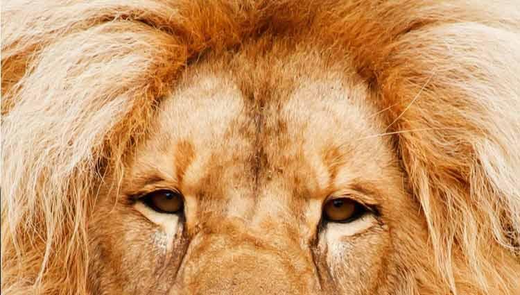 Lion Hair Frizz