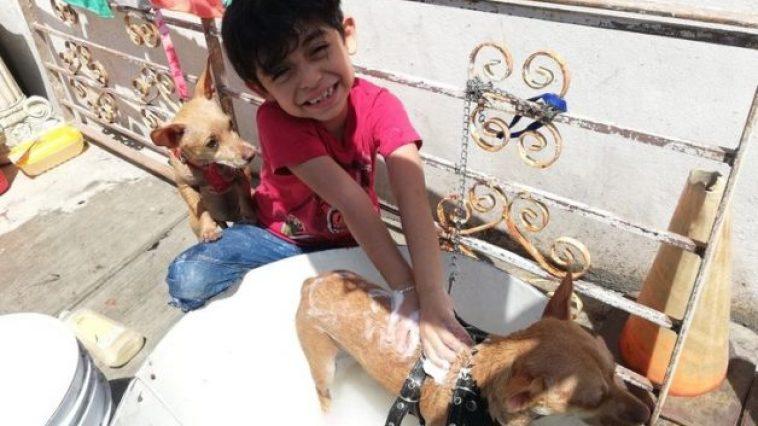 Un garçon de 7 ans fait des bains canins pour payer ses études