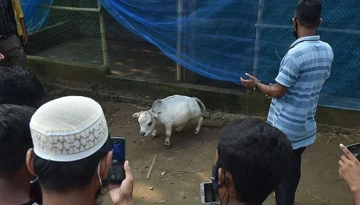 People from across Bangladesh come to see Rani. — AFP