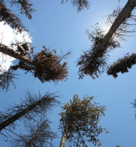 dying forests