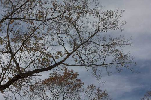 bare-branches-front-yard.jpg