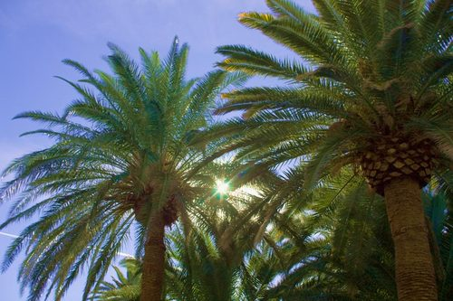 blue-palm-tree.jpg