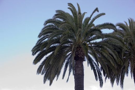 palm-trees-in-irvine.jpg