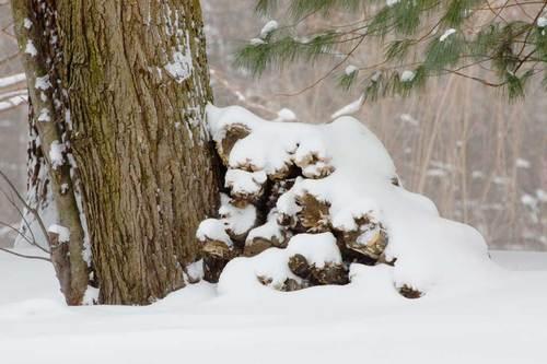 snowy-wood-pile.jpg