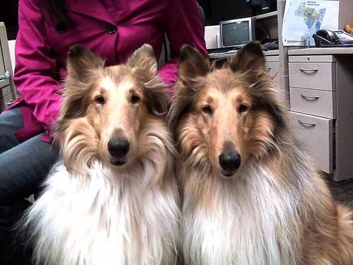 stepford-dogs.jpg