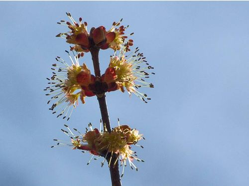 trees-in-bloom-1.jpg
