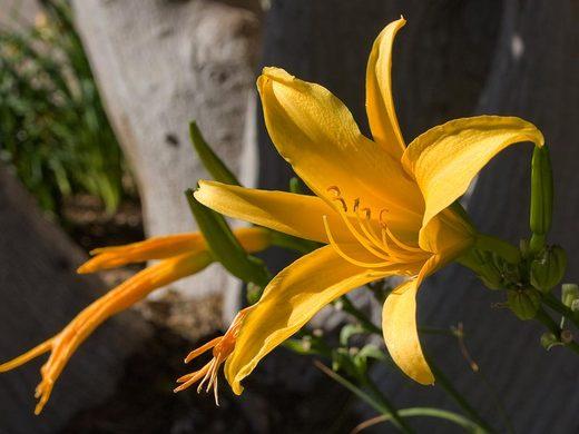 yellow-flower.jpg